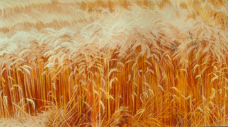 Wheat, noon,(2) pastel 35x23  Sylvie Berman artiste peintre