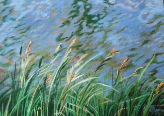 Reeds, Midi canal, pastel 25x19 Sylvie Berman artiste peintre