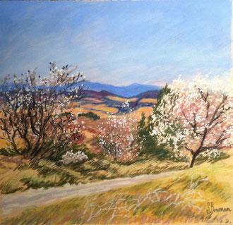 Amandiers en Minervois, pastel 32x30cm Sylvie Berman artiste peintre