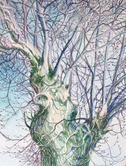 Frêne, pastel 65x50 - Sylvie Berman artiste peintre