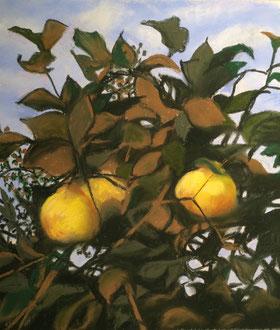 Les coings   pastel 30x32Sylvie Berman artiste peintre