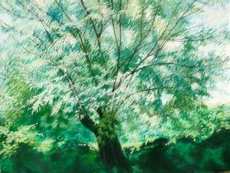 Saule de Fontvieille, pastel 65x50 cm - Sylvie Berman Artiste peintre