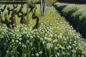 Les vieilles vignes, pastel 39x29 Sylvie Berman artiste peintre (vendu)