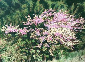 Arbre de Judée ( la dernière surprise du printemps) Pastel 50x38 cm  Sylvie Berman Artiste peintre