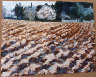 The first almond tree, pastel 10x8 Sylvie Berman artiste peintre