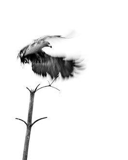 Geist des Moors [600 mm / f5.3 / ISO 100 / 1/50 Sek.]