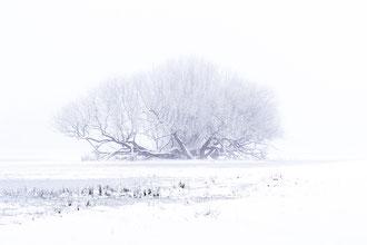 Winter-Weide [100 mm / f11 / ISO 100 / 1/25 Sek.]