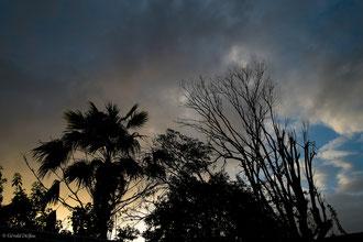 Guadeloupe, Port-Louis, arbres sous ciel du soir