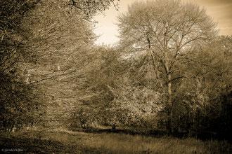 Forêt de Vauluisant, Yonne