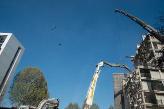 Paris XIII, tour des sablières, destruction sous les yeux des pigeons