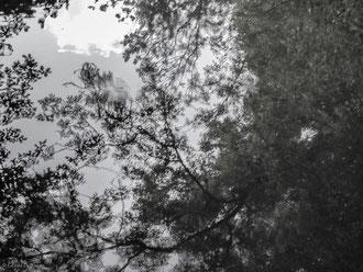 Forêt de Crécy, Seine-et-Marne