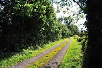 Route typique irlandaise