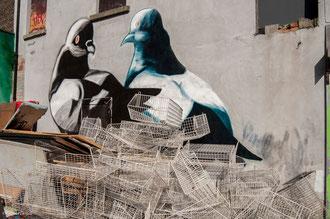 Graff de pigeon et paniers sur un mur de Dublin, Irlande