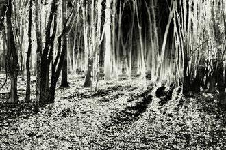 Solarisation de la forêt de Vauluisant, Yonne