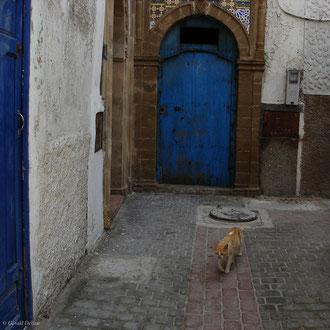 Chat dans une rue d'Essaouira au Maroc