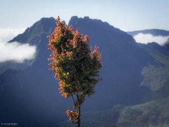 Végétation sur fond du Piton des neiges, Ile de la Réunion