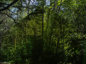 Forêt-miroir, Gaspésie, Canada