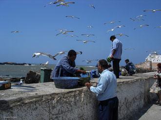 Vente de poisson sur le port d'Essaouira au Maroc
