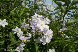 Fleurs à Vestric-et-Candiac, Gard
