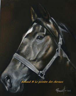 renaud-hadef-artiste-equin-OURASI-huile sur toile 60x60cm
