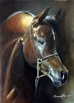 renaud-hadef-artiste-equin-PUR SANG ARABE-huile sur toile 80x60cm