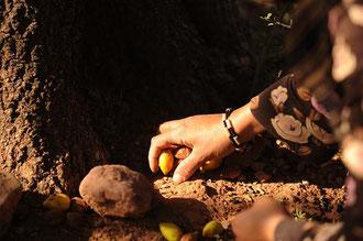 Arbeiterinnen eine Argan - Öl Kooperative beim Auflesen der Früchte / Argan-Öl - Marokko