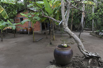 Ben Tre Provinz / Mekongdelta / Anbau und Verwertung von Kokospalmen