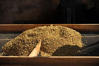 Waschen der Kaffeebohnen: Ein enormer Arbeitsaufwand, höchste Qualität für den Export und immer noch zu niedrige Preise.. / Kaffee - Äthiopien