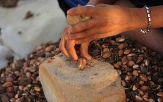 Frauen erledigen das öffnen der Nüsse in sehr mühevoller Arbeit, indem sie mit mit einem Stein auf die Kante der Arganfrucht klopfen.. / Argan-Öl - Marokko