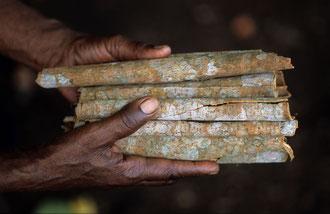 Organischer Zimt in Sansibar / Gewürze - Sansibar