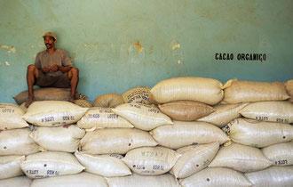 Organasischer Kakao - fertig für den Export / Kakao - Dominikanische Republik