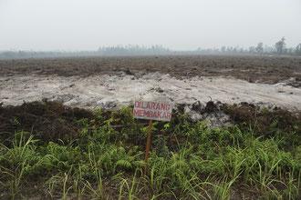 Brandrohdung für den Anbau von Palmölpflanzen