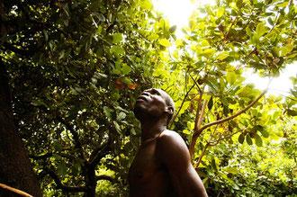 Cashew Bauer bei der Pflege der Kultur / Cashew -Tansania