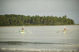 Palawan Kleinfischer / Fisch - Philippinen