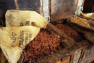 Zum Verarbeitungsprozess gehört das Fermentieren und Trocknen / Kakao - Dominikanische Republik