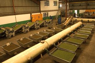 Teefabrik in Luponde / Tee - Tansania