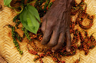 Organischer Pfeffer in Sansibar / Gewürze - Sansibar