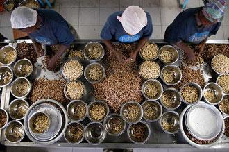 Die Cashew - Kerne werden nach Größe und Qualität sortiert / Cashew -Tansania