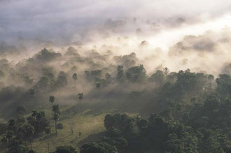 Kakaowälder im Morgengrauen / Kakao - Dominikanische Republik