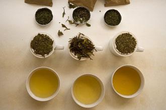 Teeverkostung und Test / Tee - Tansania