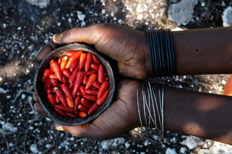 Organische Chilly in Sansibar / Gewürze - Sansibar
