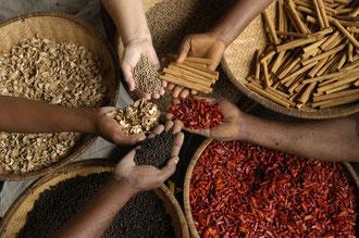 Organische Gewürze aus Sansibar / Gewürze - Sansibar