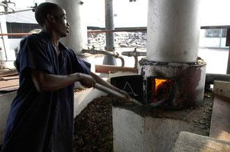 Befeuerung der Öfen / Cashew -Tansania