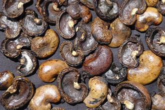 Die Schalen der Cashew - Kerne / Cashew -Tansania