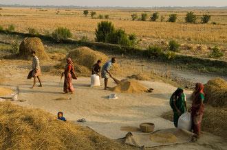 Reis Sammelstelle / Reis - Bangladesh