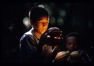 / Kakao - Dominikanische Republik