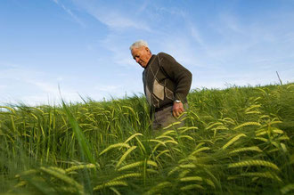 Ein Bauer der Cooperative / Gerste - Italien