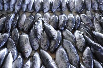 Palawan Fischmarkt / Fisch - Philippinen