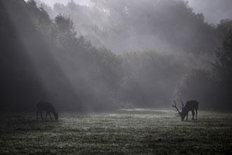 Un maschio ed una femmina avvolti da una tenue nebbie all'alba