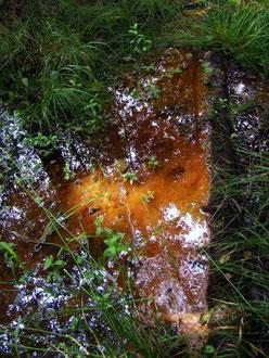 Ockerfarbene Absonderungen im Bachlauf
